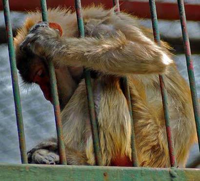 人与动物关系也成为了伦理学关注的内容。处理这些 ...
