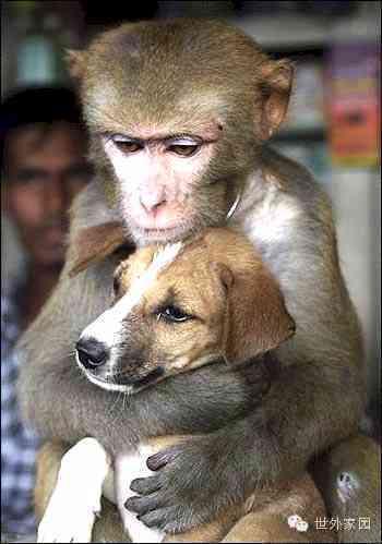 南京爆炸感人一幕:猴子救狗逃命 - 莱芜 德广 - 莱芜 德广