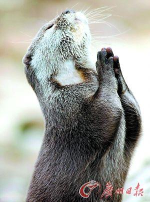 祈祷的动物图片