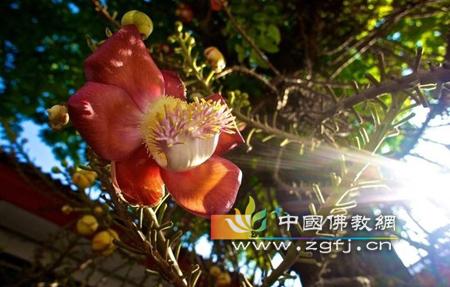 图解佛教中的五种吉祥花