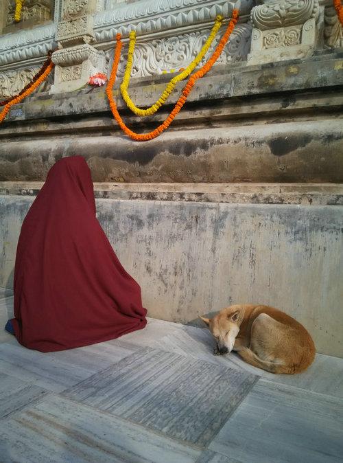 印度朝圣——菩提迦耶佛陀成道处正觉塔园撷影