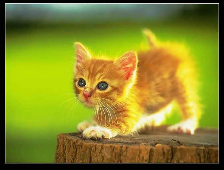 手工制作纸杯动物 小猫