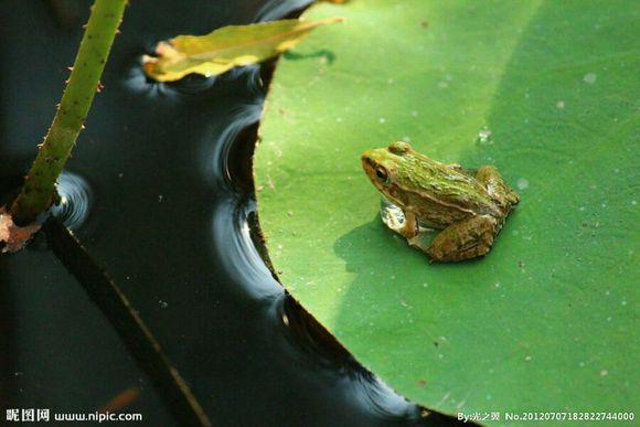青蛙是不是保护动物