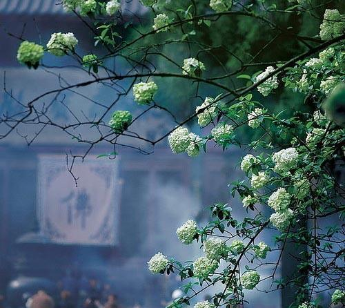 新年去寺院烧香示威的10个要点你把握了吗?