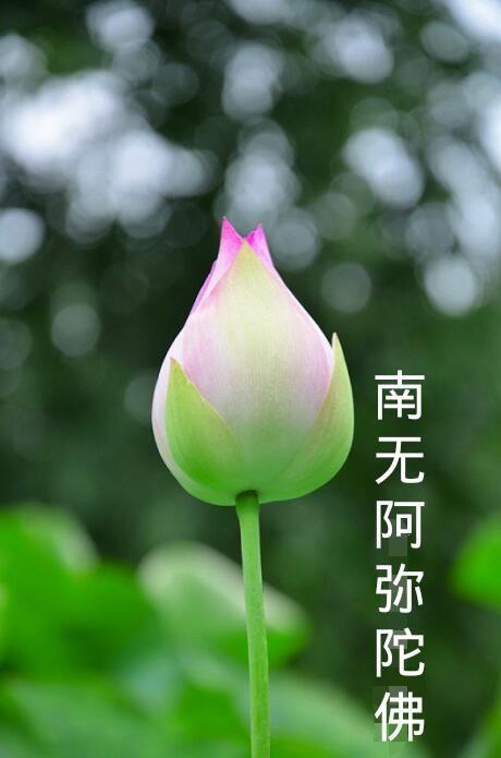 佛经谈有十二种病及对症之药